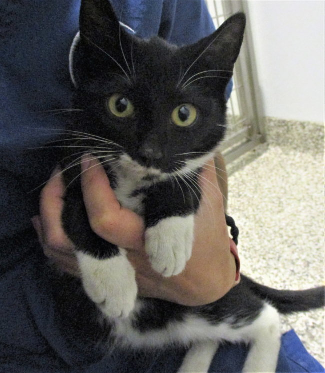 Binx - Adopt me from Safe Harbor Rescue